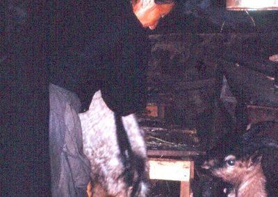 À la Goulaz, Félicienne Clappier dans son étable