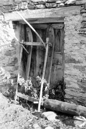 """Une """"lietta"""" dressée photo Peter Guggenbühl 1967"""
