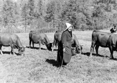 Virginie Tracq et ses vaches photo Peter Guggenbühl 1967